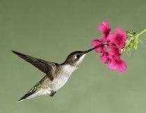 oiseau-shutterstock_58968394